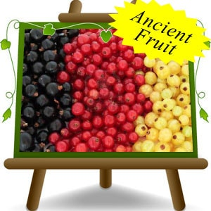 Ribes---Currants-(Eng)-min