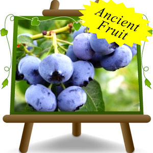 American-Blueberry-Legacy---Ancient-Fruit