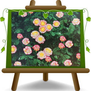 climbing-rose-pink-white-small-flower